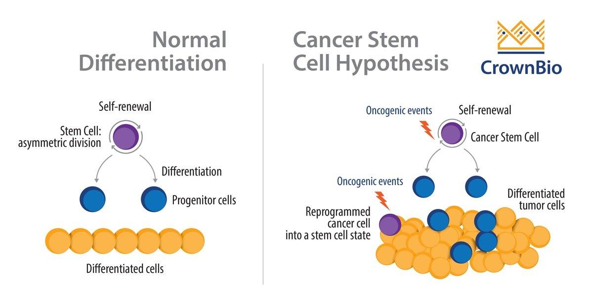 سلول های بنیادی سرطانی