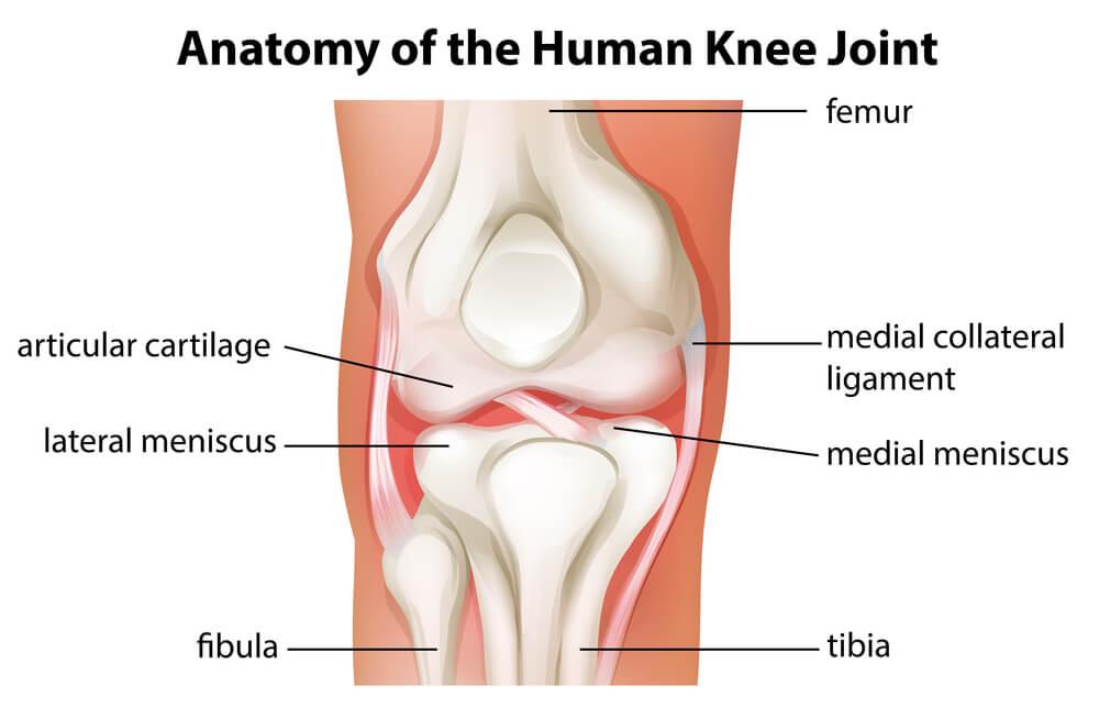 مفصل - joint