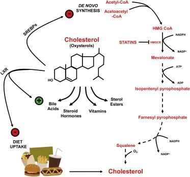 سرطانی متاثر از کلسترول